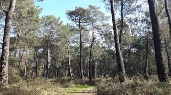 Forêt du morbihan
