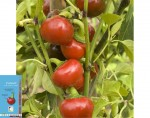 Piment Red Cherry Small - 30 graines